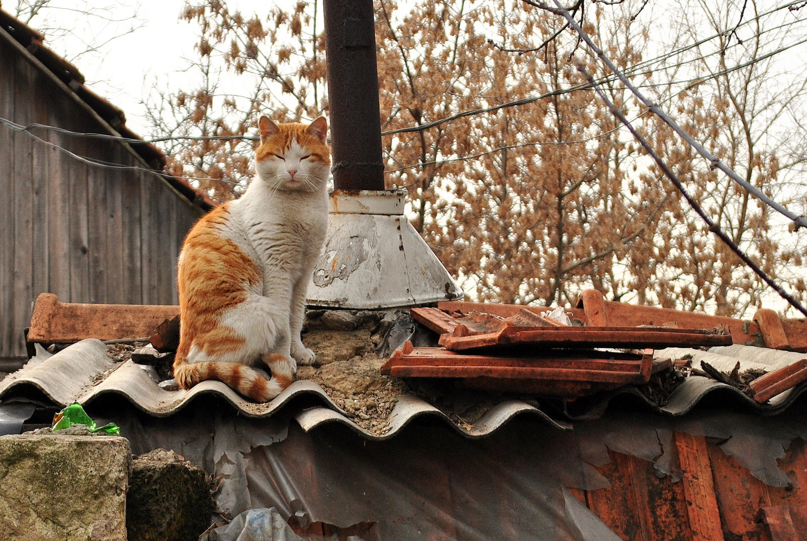 На даху старої Спаської таможні