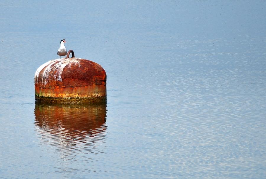 Короткий миг в календарных циклах Яхтклуба, когда лето наступает внезапно, сомнительный прогноз погоды и чуйка подводят бабулек и они вместо купальников одевают кофты. Зато в ноябре их из воды не вытащишь :)