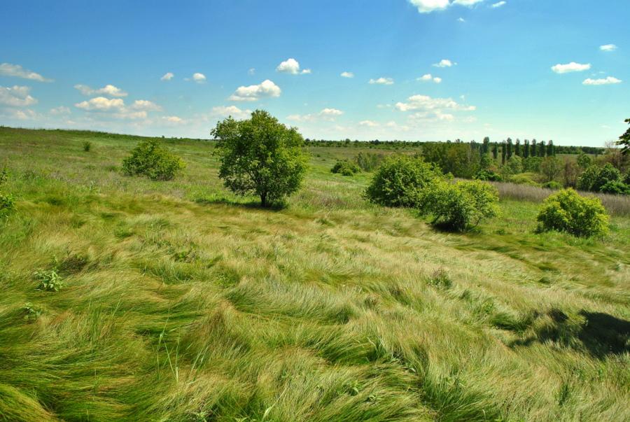 Природний заповідник Єланецький степ